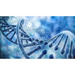 Quick Gene Series