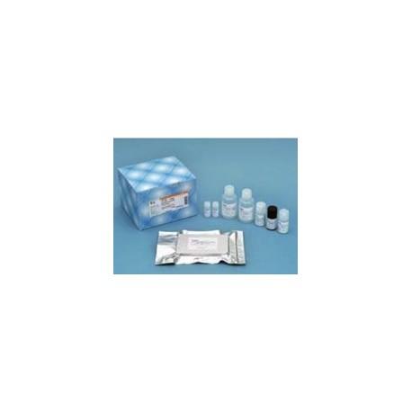 Human Beta Amyloid (1-42) Elisa Kit Fujifilm WAKO