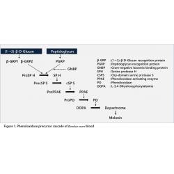 Les tests de détection du peptidoglycane et du β-D-glucane