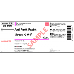 Anti Pax6, Rabbit Polyclonal Antibody - Fujifilm WAKO